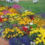 Оформление цветников и клумб на даче
