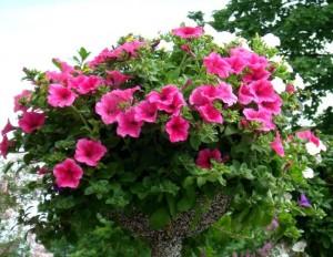 Вазоны для цветов своими руками
