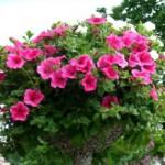 Делаем вазоны для цветов своими руками
