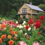 Цветы для клумб и цветников