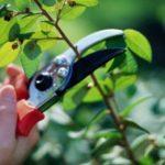 Разновидности обрезки и стрижки деревьев
