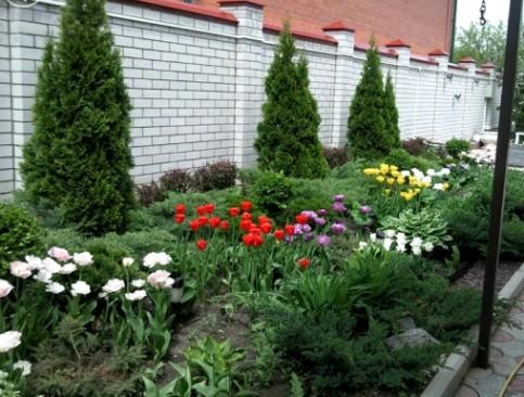 Пионы по краю дорожки и клумбы сада