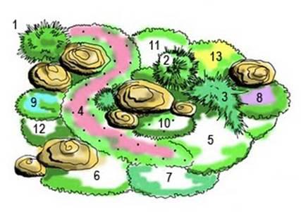 Схема расположения растений на