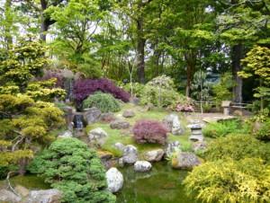 26 август 2011 категория сад и огород