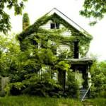 Вертикальное озеленение дома и сада
