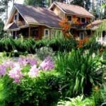 Многолетние садовые цветы и растения для дачи