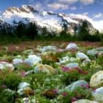 Маленькая альпийская горка — кусочек природы Альп на вашем участке