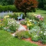 Клумба непрерывного цветения на вашей даче