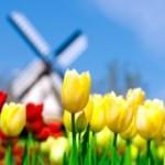 Тюльпаны — особенности посадки, выращивания и ухода. Когда и как сажать?