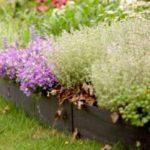 Бордюрная лента – варианты использования для сада и огорода