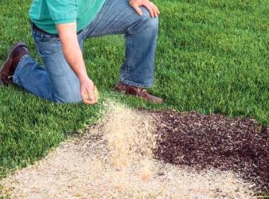 Можно ли подсеивать другим газоном