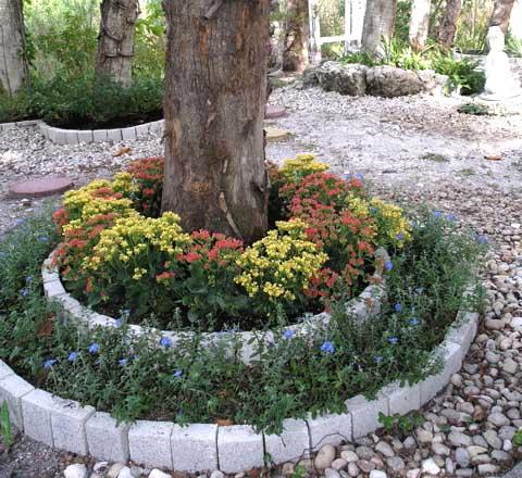 Цветник под деревом выбор растений и