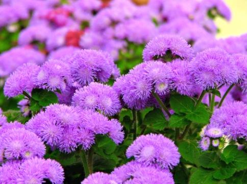 Низкие цветы на клумбе фото
