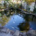 Как разводить рыбу в пруду на даче?