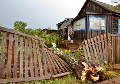 На каком расстоянии можно сажать деревья от забора соседа 44