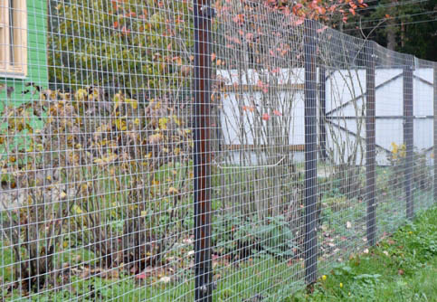 Забор из сварной рулонной сетки