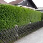 Из чего и как сделать живую изгородь на даче?