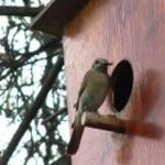Мастерим скворечники для птиц своими руками