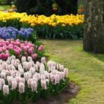 Планируем и оформляем красивый цветник на даче своими руками