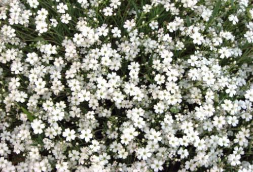 Какие есть песни про цветы