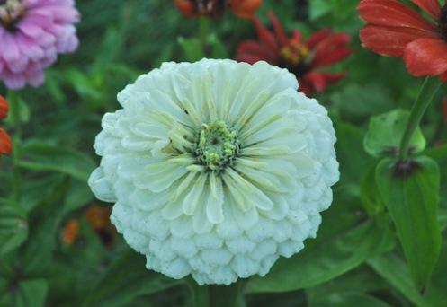 Цветок с белыми цветами