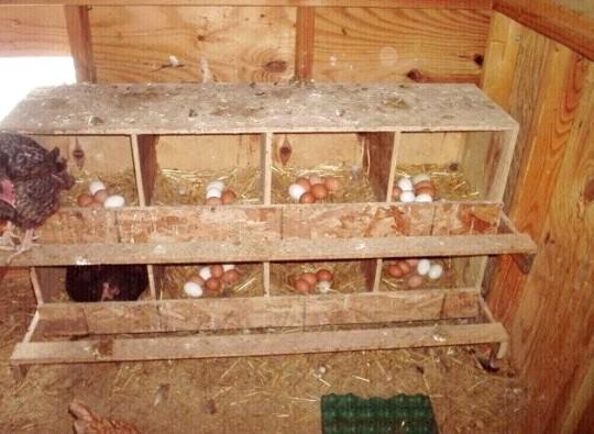 Удобные гнезда для кур несушек