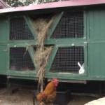 Как построить крольчатник на даче своими руками?