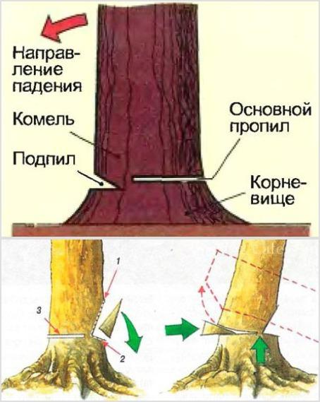 Рис. №1 схема резки ствола бензопилой Рис. №2 (1, 2 – верхний и нижний подпилы, 3 – основной валочный пропил)