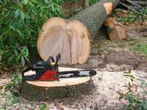 Можно ли упавшее дерево попилить