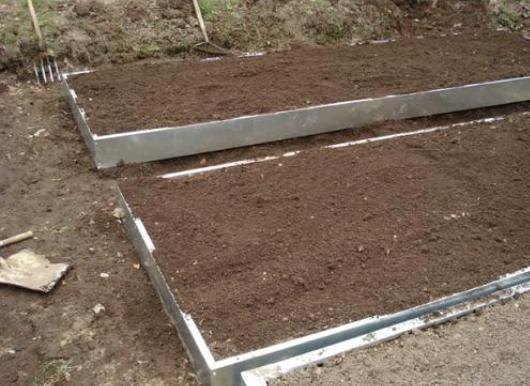 Як садити часник