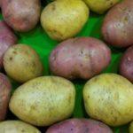 Лучшие сорта картофеля: описание и характеристики