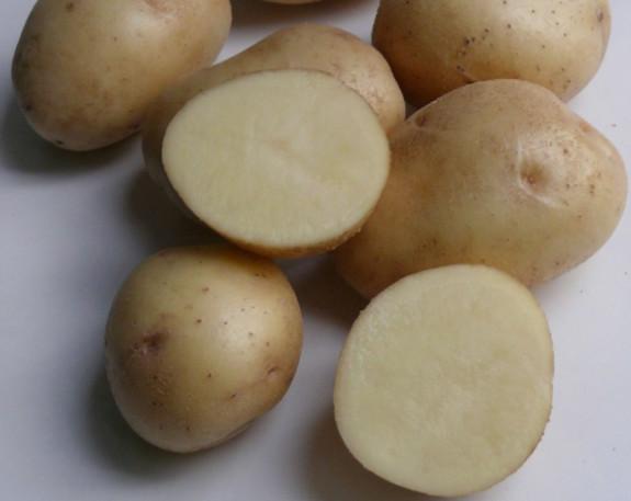 Характеристика картофеля
