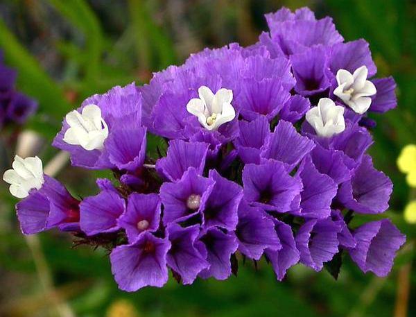 Букеты из сухоцветов своими руками