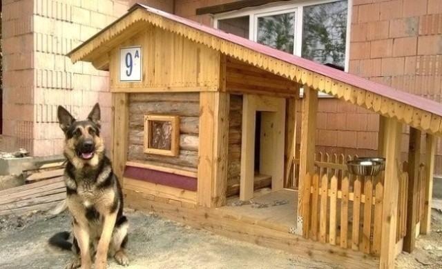 Чертеж будки для немецкой овчарки