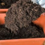 Грунт для рассады: готовим качественную почвосмесь самостоятельно