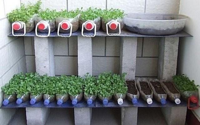 Лайфхаки для огорода и сада: 15 примеров дачной хитрости и находчивости