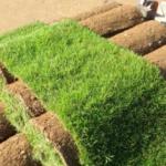 Особенности укладки и ухода за рулонным газоном