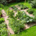 Как красиво сделать и правильно расположить грядки на огороде?