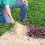 Когда и как сеять газонную траву?