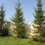 На каком расстоянии сажать деревья от объектов ландшафта и архитектуры?