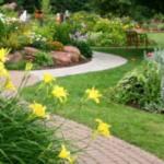 Создаем красивый газон на даче — дизайн и оформление