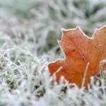 Газон зимой — правильная подготовка и уход