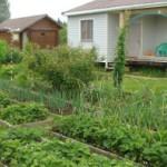 Как избавиться от сорняков на огороде: эффективные способы и средства