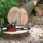 Как правильно спилить дерево: можно ли сделать это самому и куда обращаться?