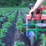 Окучивание картофеля мотоблоком: агротехническое обоснование и нюансы процесса